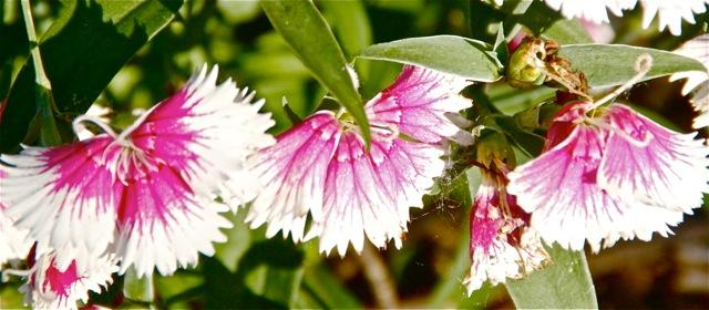 170621bbcut-flora3