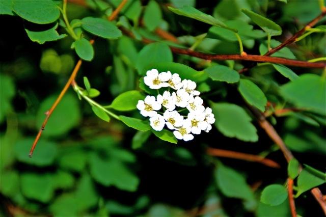 170621bbcut-flora4