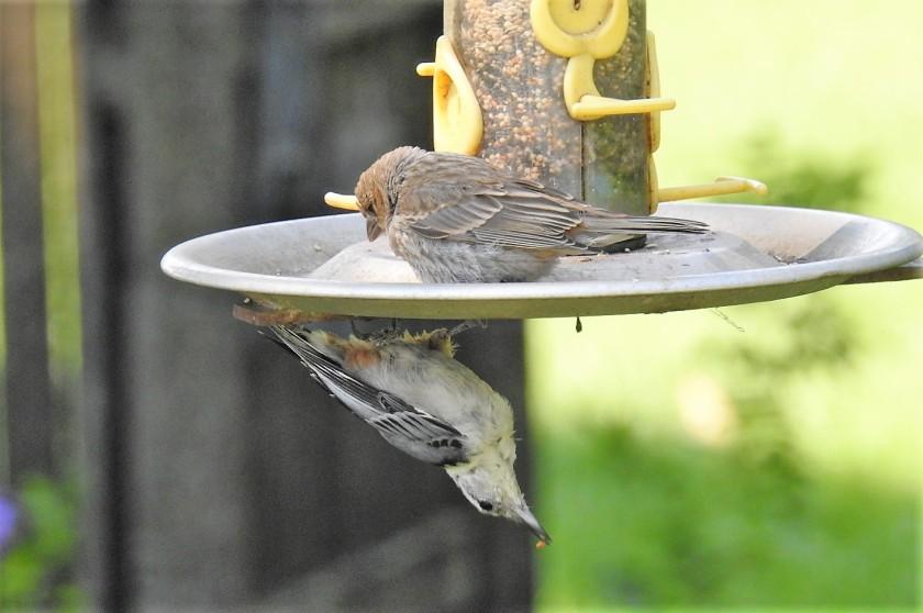 170731bbcut-birdfeeder