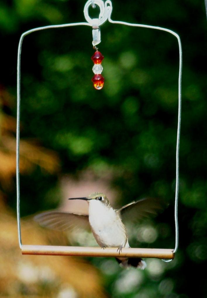 170807bbcut-hummingbird5