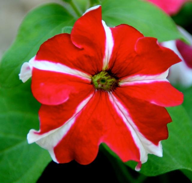 170808bbcut-flower1