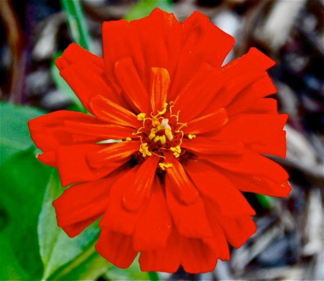 170808bbcut-flower3