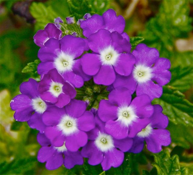 170809bbcut-flower1