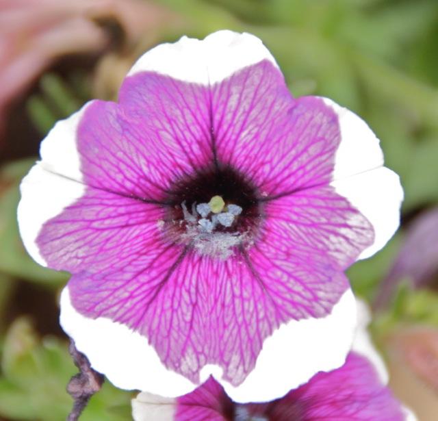170809bbcut-flower2