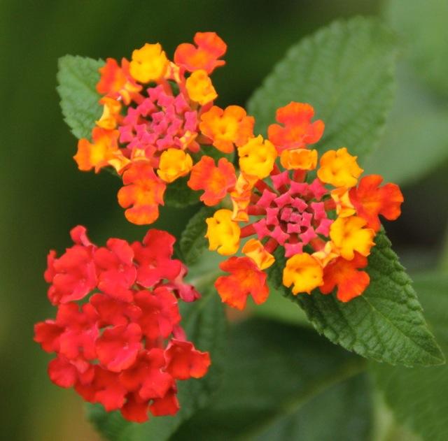 170809bbcut-flower3