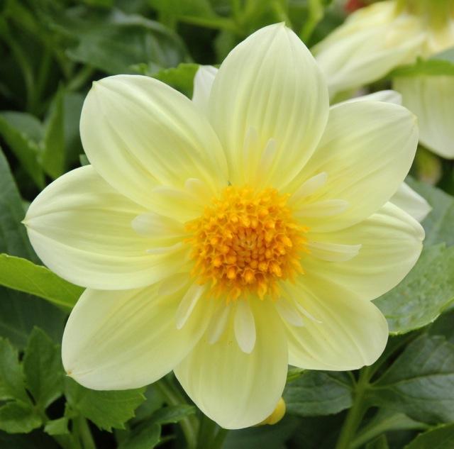 170809bbcut-flower4