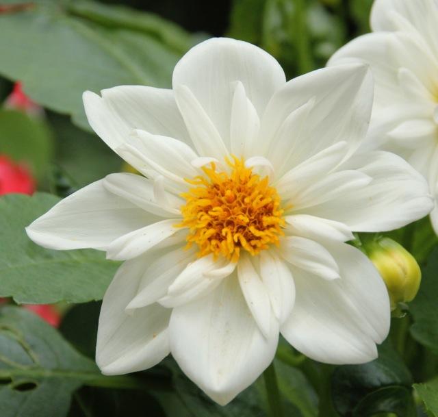 170809bbcut-flower5