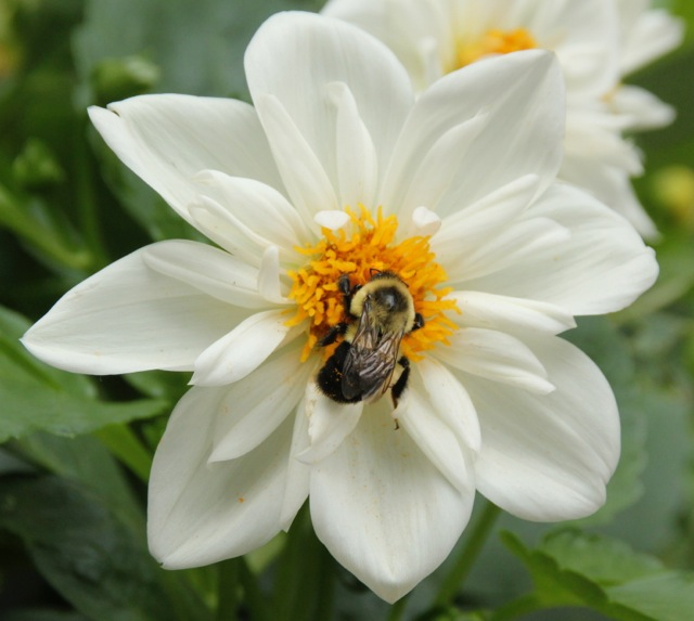 170809bbcut-flower6