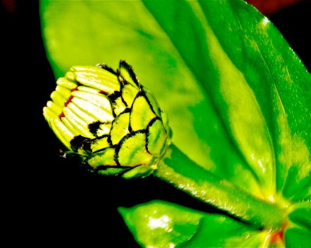 170814bbcut-flower2