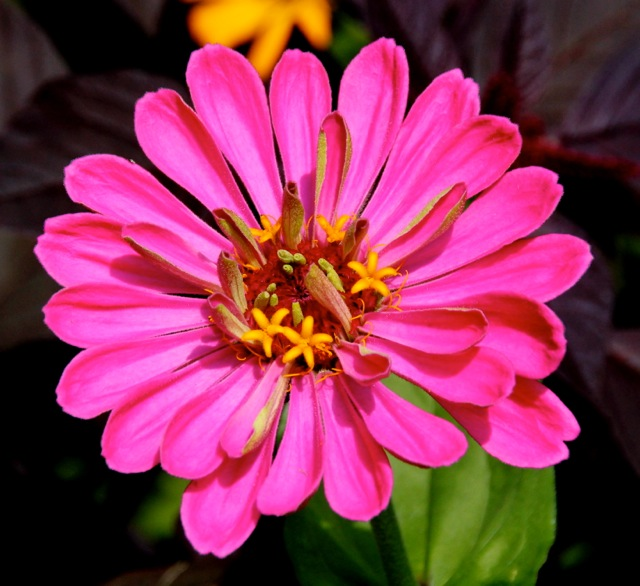 170817bbcut-flower2