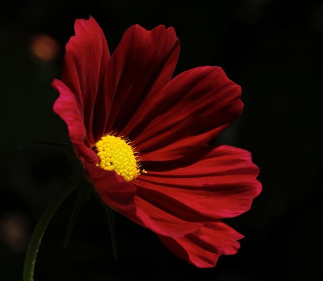 170817bbcut-flower3