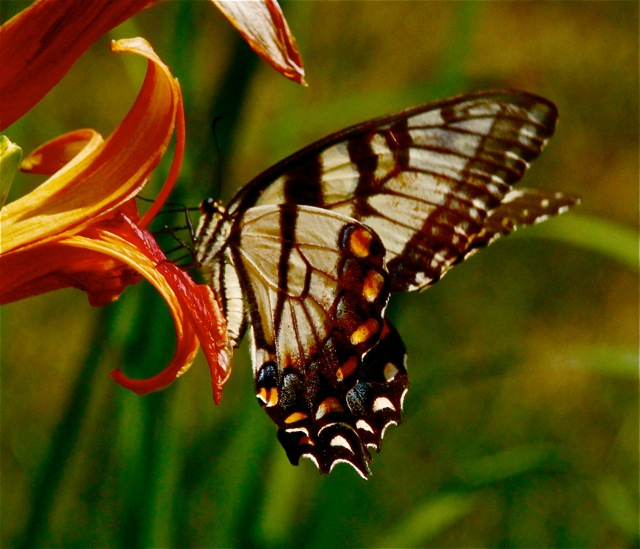 170817bbcut-flower4