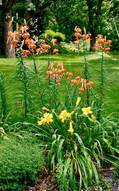 170817bbcut-flower5