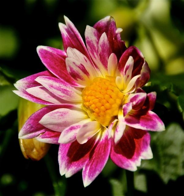 170829bbcut-dflowers1