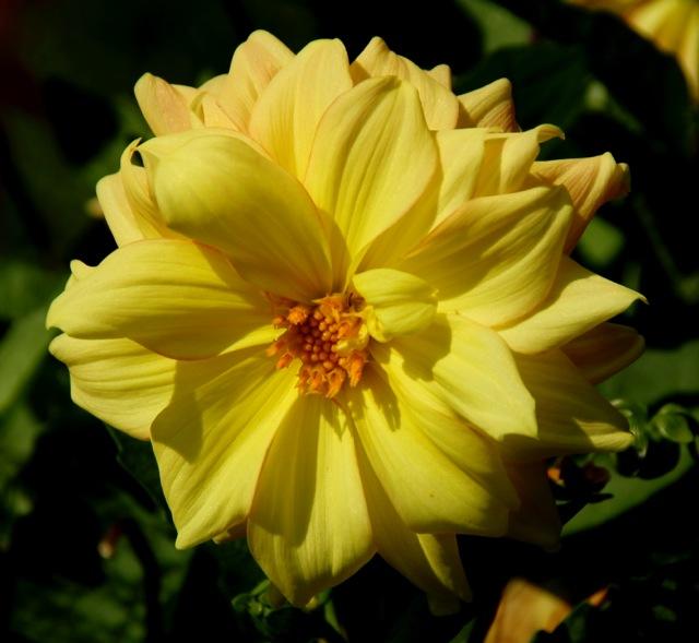 170829bbcut-dflowers2