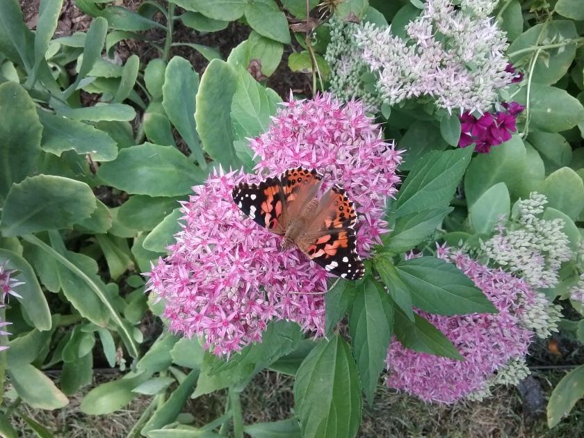 170907bbcut-moth