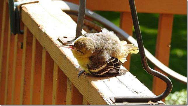 170923bbcut-babybird1