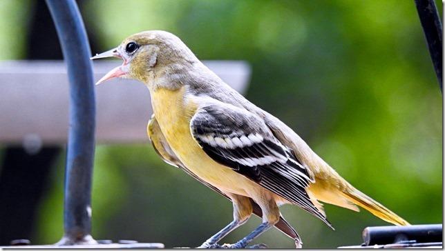 170923bbcut-babybird3