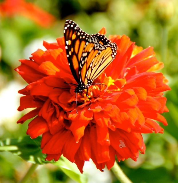 170926bbcut-butterfly1