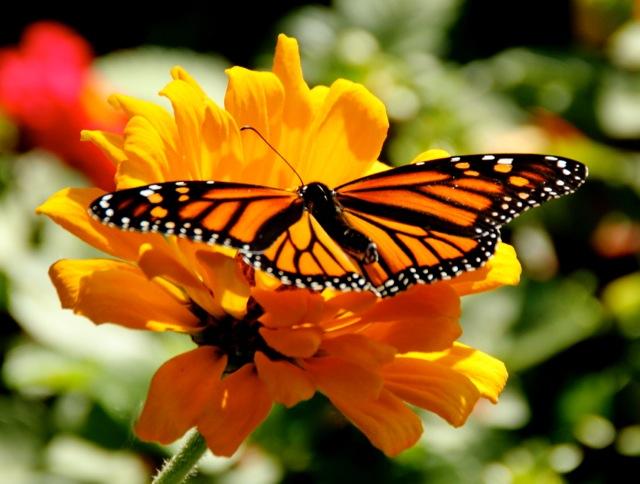 170926bbcut-butterfly2