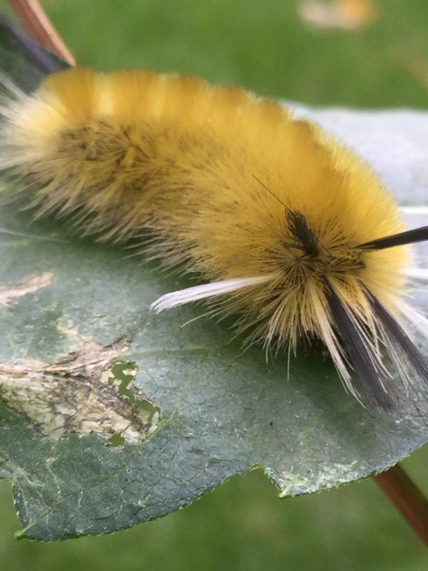 170927bbcut-caterpillar