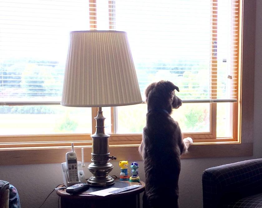 171003bbcut-dogwatchingtrains