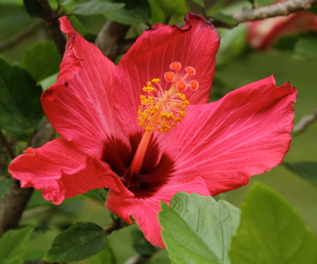 171009bbcut-flowers1