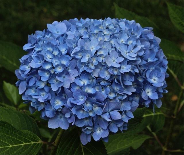 171009bbcut-flowers3
