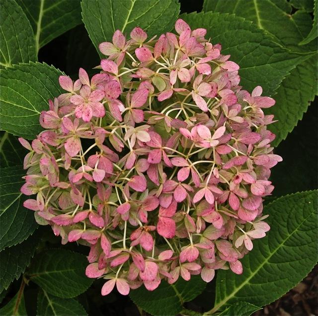 171009bbcut-flowers4