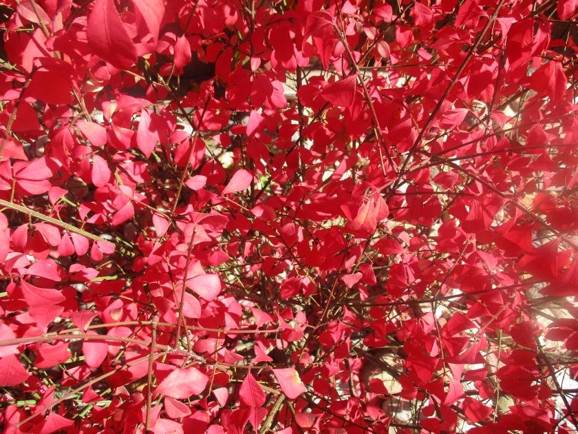171019bbcut-red