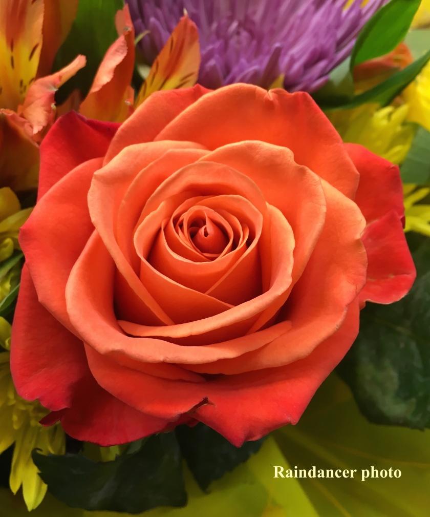 171019bbcut-rose