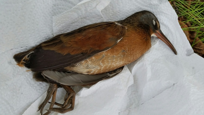 171023bbcut-deadbird