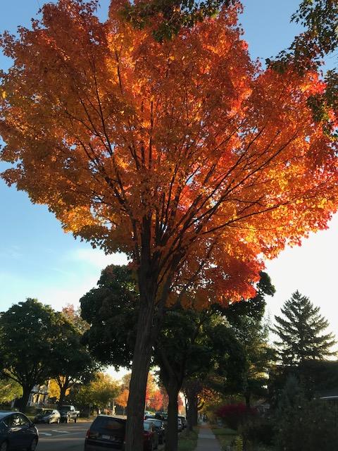 171023bbcut-prettytree