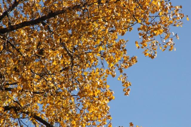 171027bbcut-tree2