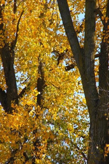 171027bbcut-tree3