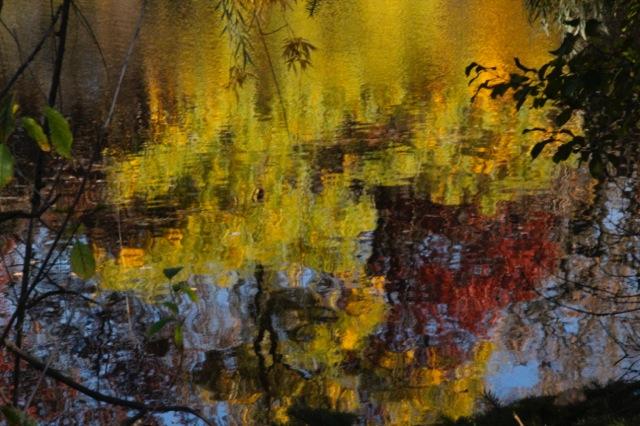171031bbcut-fallcolors4