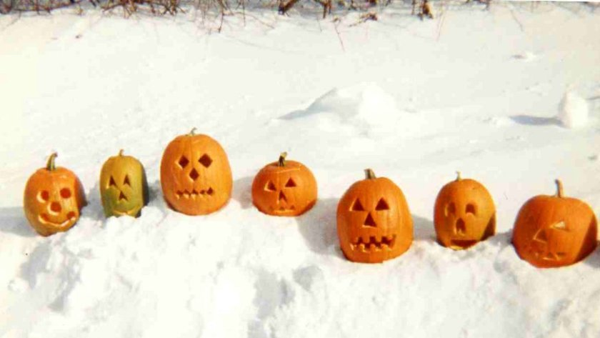 171031bbcut-pumpkins3