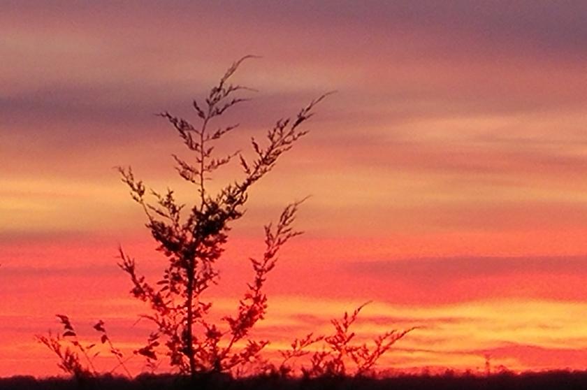 171101bbcut-sunset1