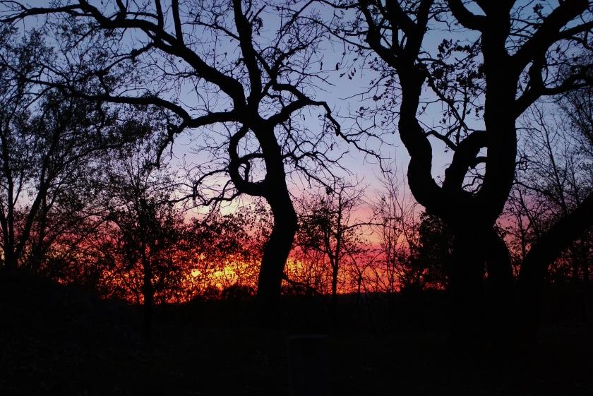 171101bbcut-sunset3