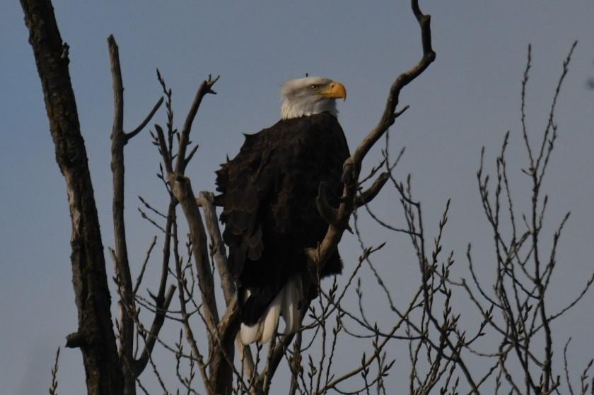 171205bbcut-eagle3