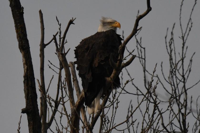 171205bbcut-eagle4