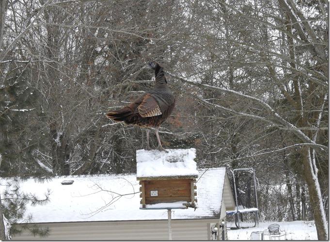 171208bbcut-turkeys1