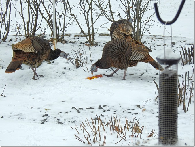171208bbcut-turkeys3