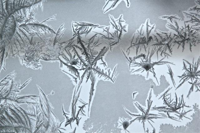 180120bbcut-frost12