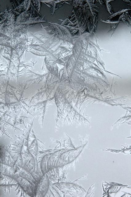 180120bbcut-frost14