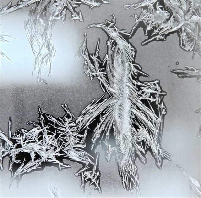 180120bbcut-frost15