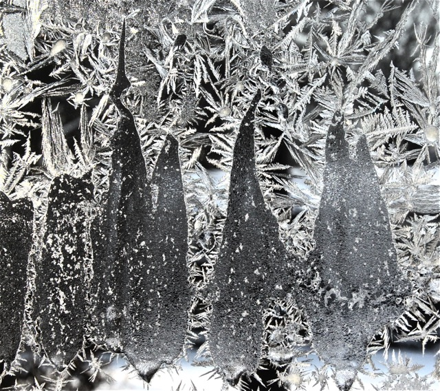 180120bbcut-frost16