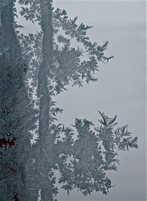 180120bbcut-frost4