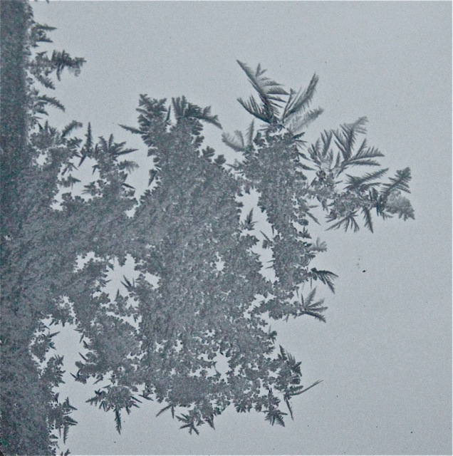 180120bbcut-frost5