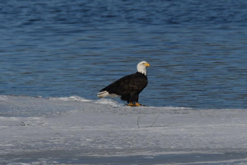 180124bbcut-eagles11